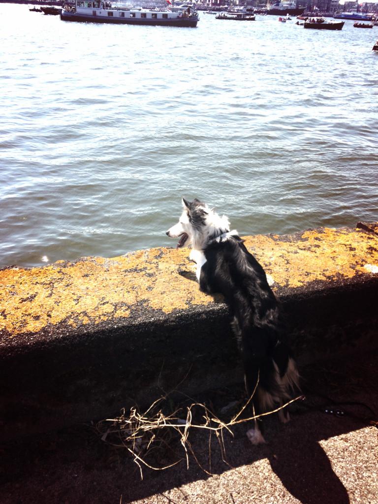 Sweet dog enjoying Sail Amsterdam