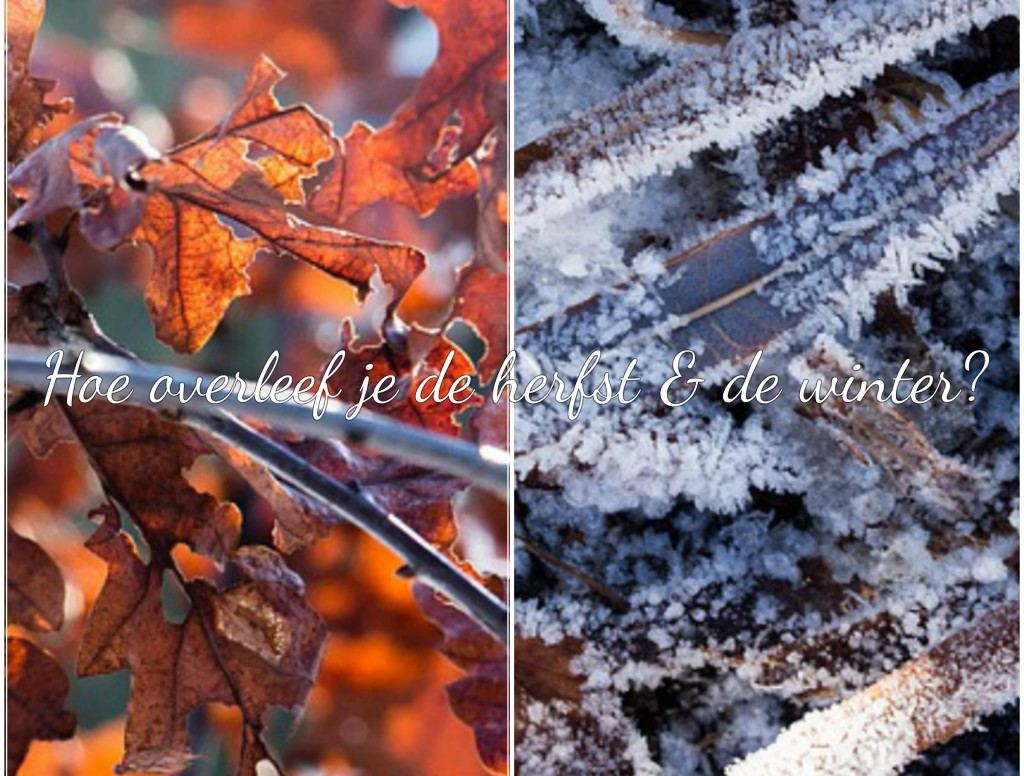Lifestyle | Tips & Tricks: hoe overleef je de herfst en de winter?