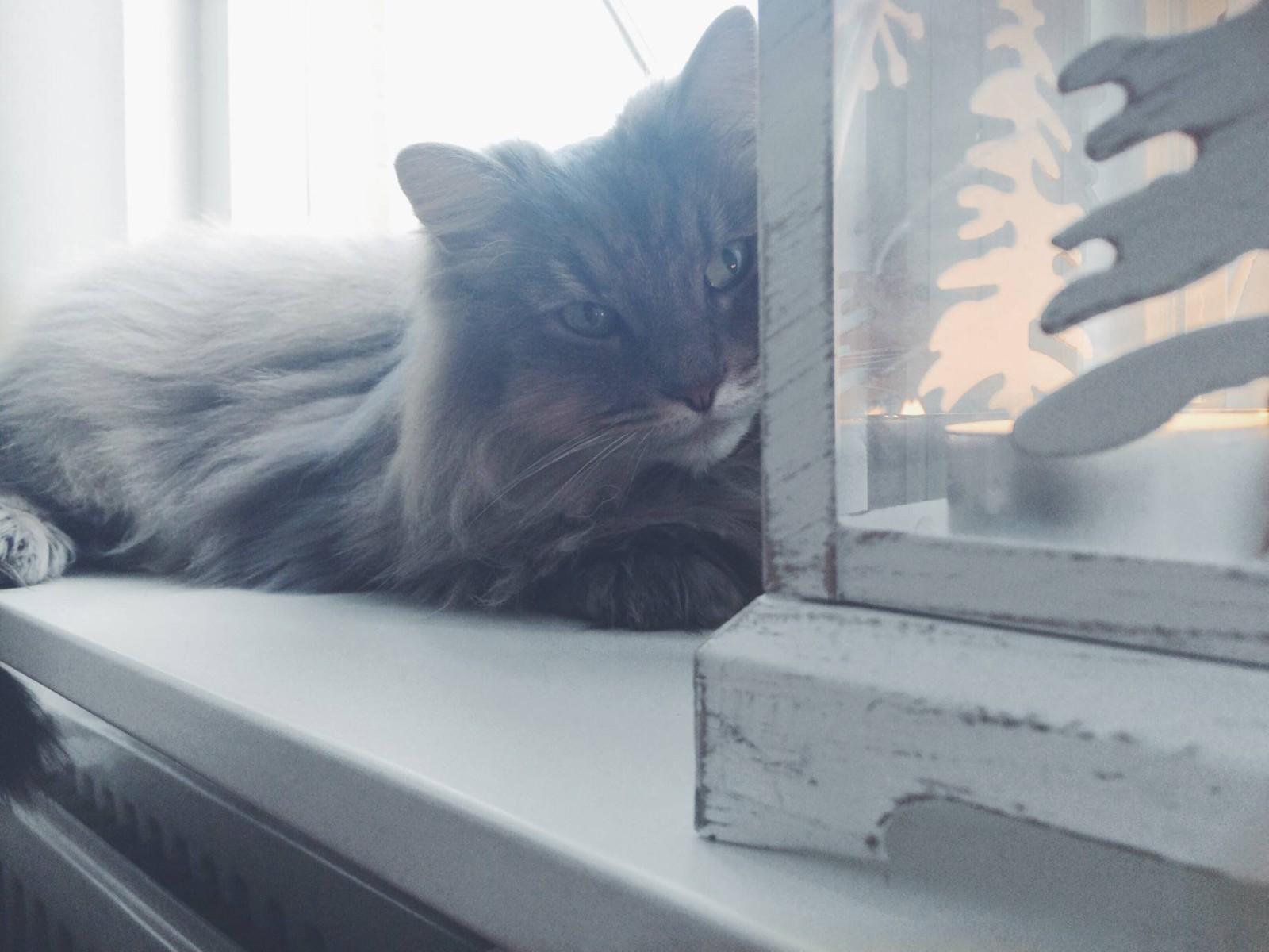 De kant van katten die niet mooi is