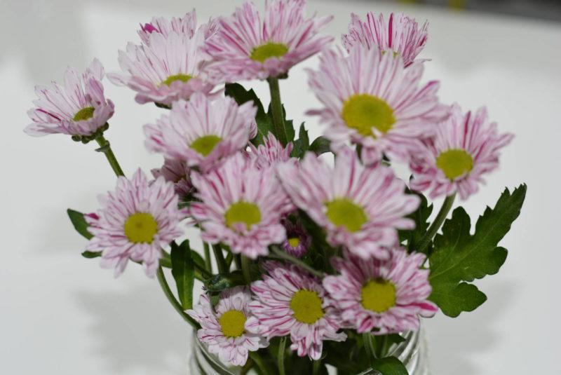 Santini-Chrysanthemums