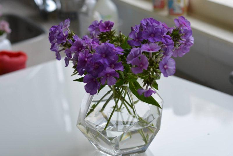 Flox bloemen (Phlox/Vlambloem)
