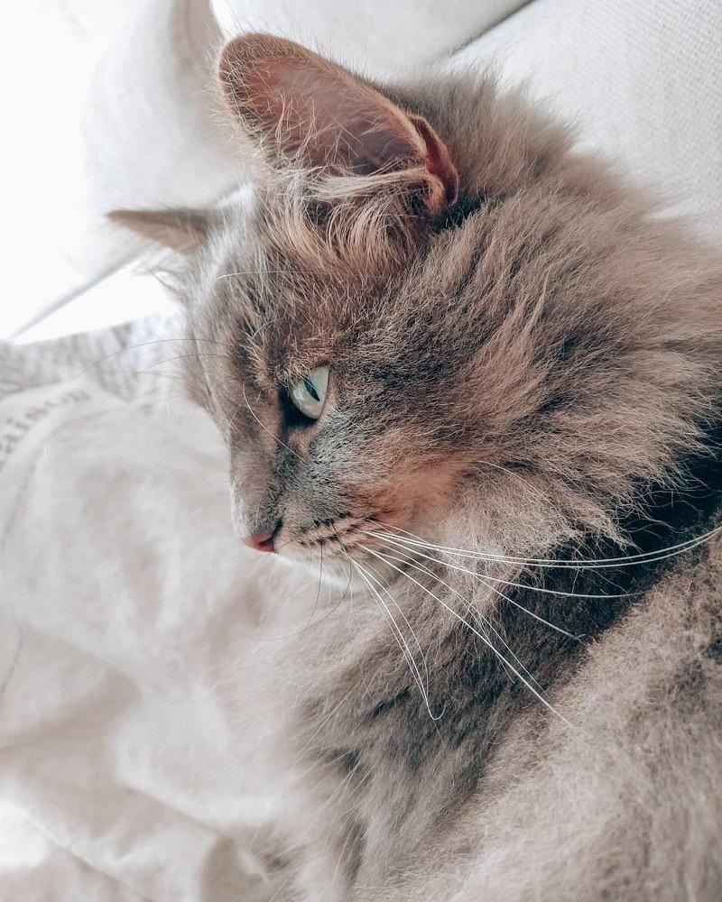 Dingen die je herkent als je…een kat hebt