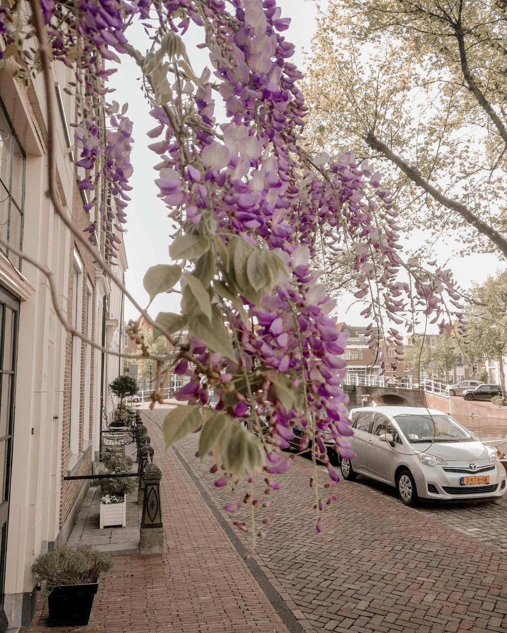 Eventjes genieten van bloemen en bloeiende bomen