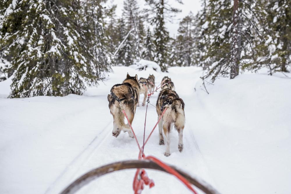 huskies-slee-sneeuw-bucketlist