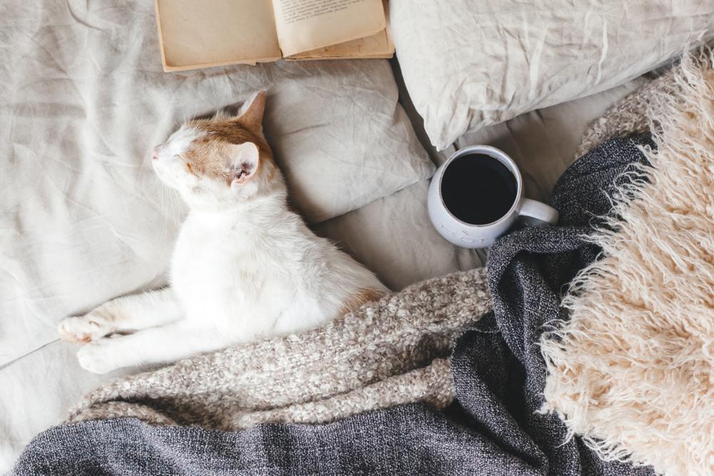 Hygge Een lekkere deken