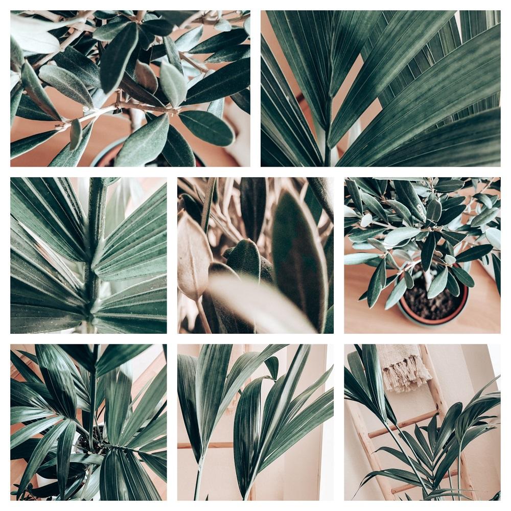 JNGL bladeren Kentia Palm en Olijfboom