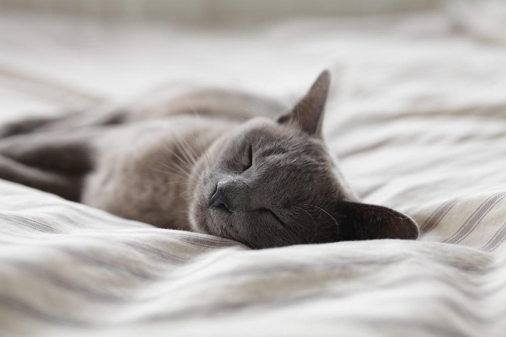 Lekker snel in slaap vallen: zo doe je dat!