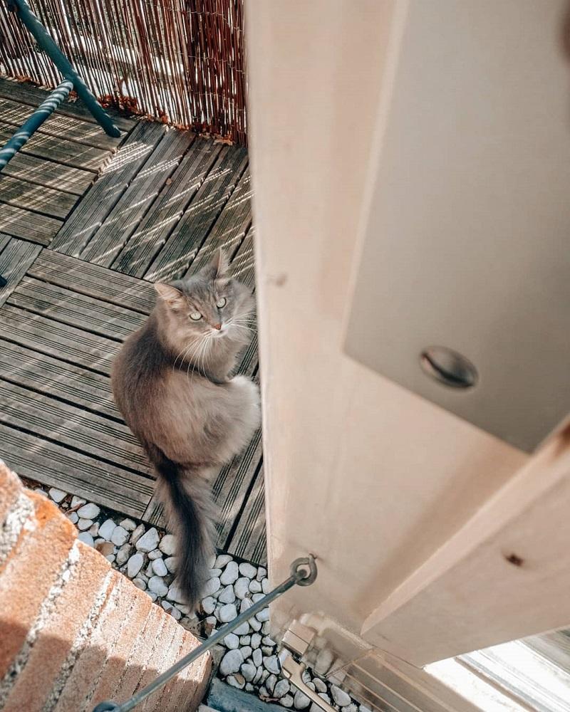 Lilly op het balkon