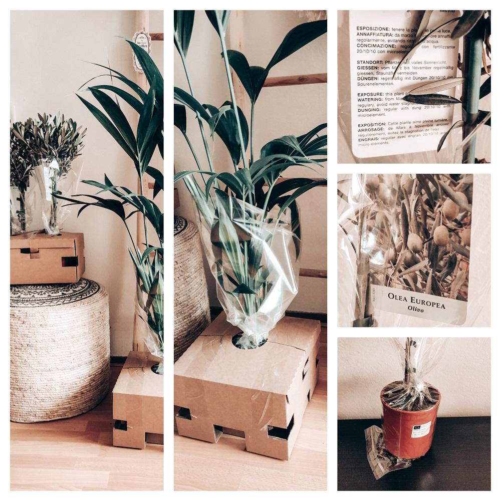 Planten verpakt JNGL