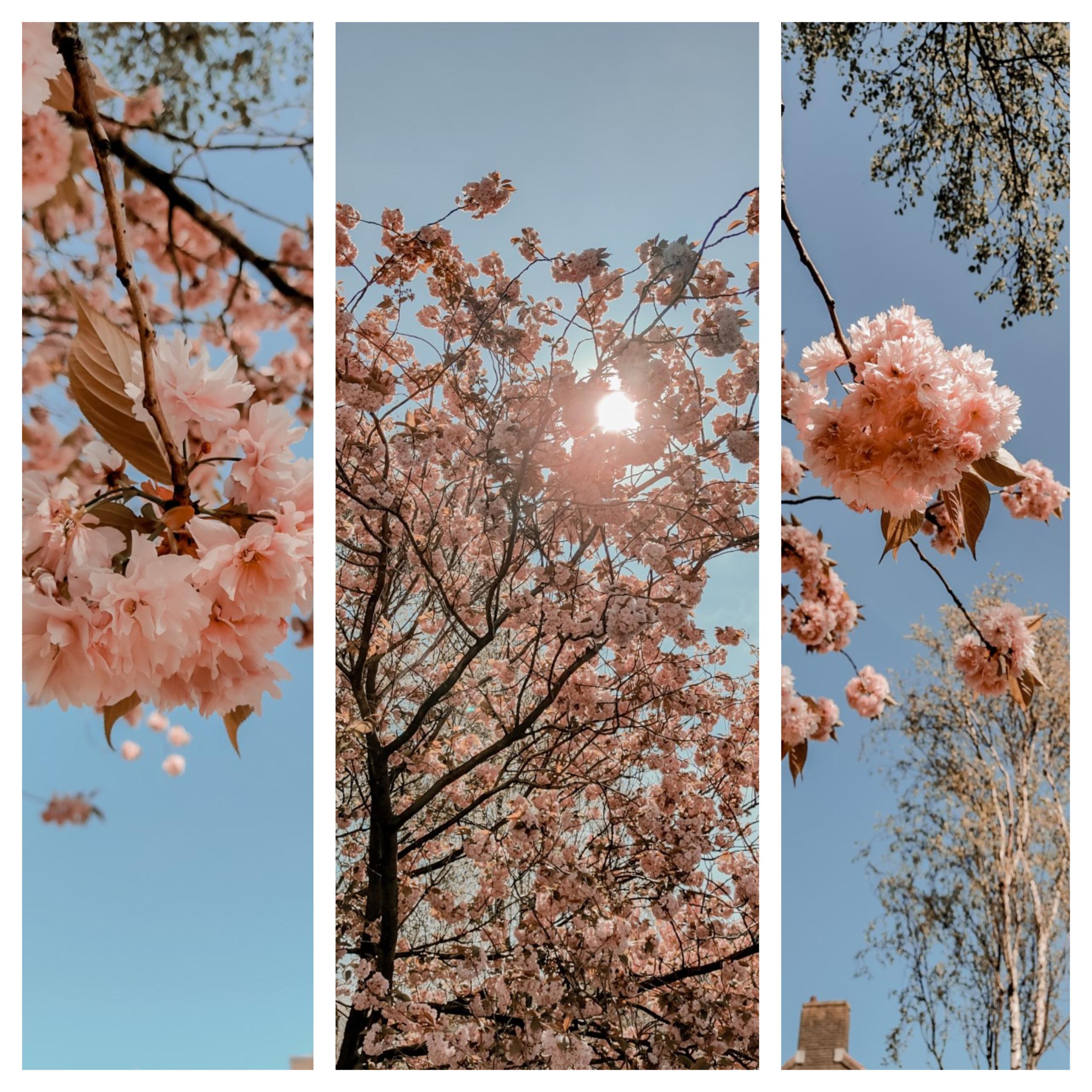 Roze bloesem Sierkers collage