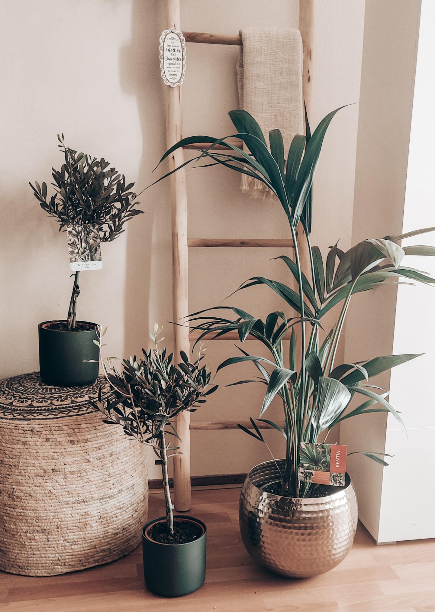 Wonen 10 x makkelijke planten voor binnen en waarom je er gelukkig van wordt