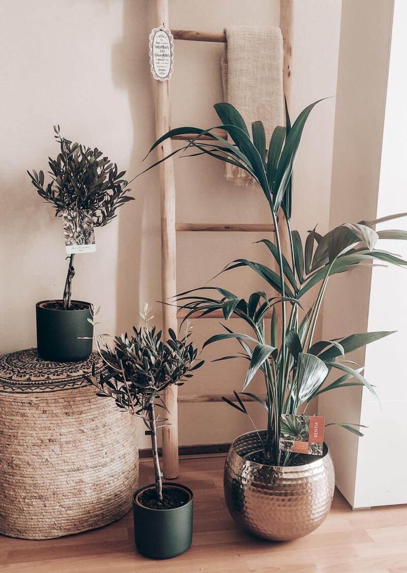 Wonen | 10 x makkelijke planten voor binnen en waarom je er gelukkig van wordt